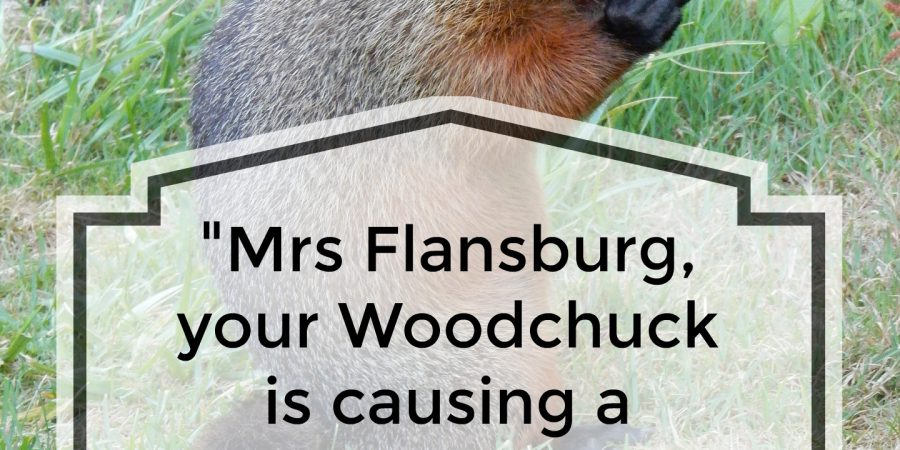 """Mrs Flansburg, your Woodchuck is causing a Ruckus...."""