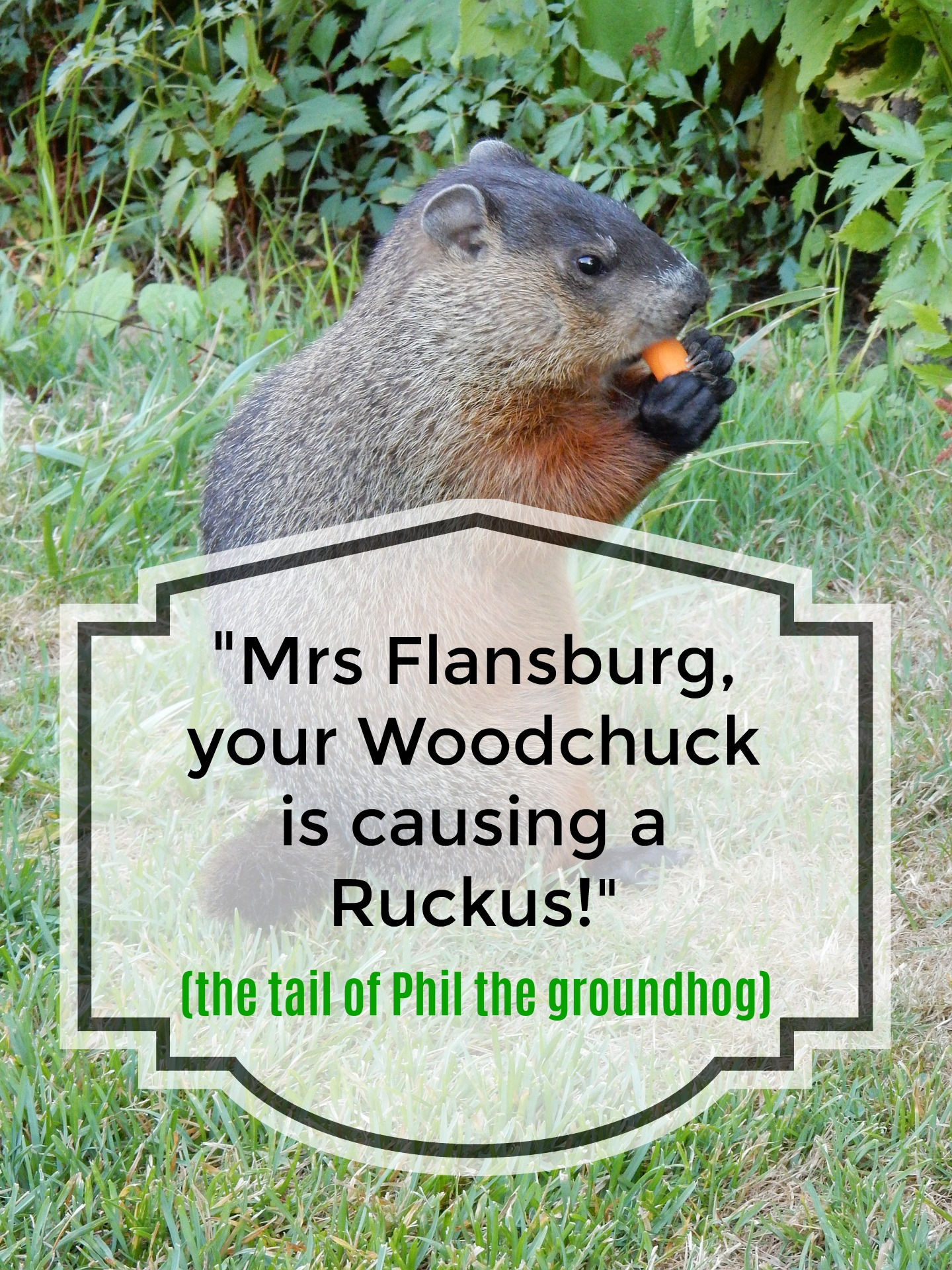 """""""Mrs Flansburg, your Woodchuck is causing a Ruckus...."""""""