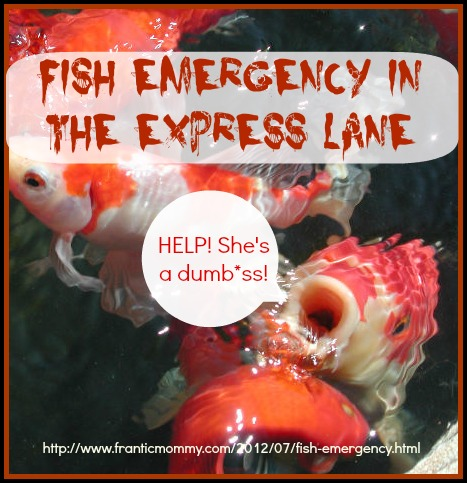 Fish Emergency in The Express Lane